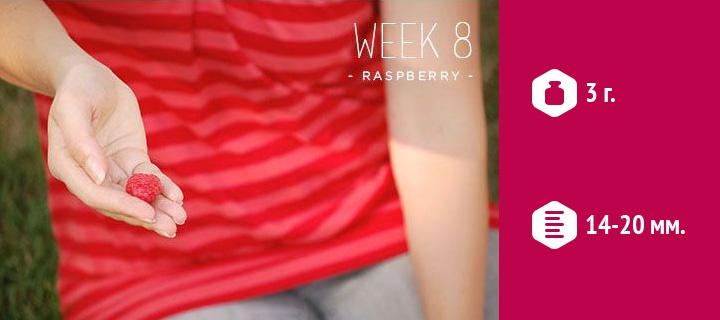 размер эмбриона в 8 недель беременности