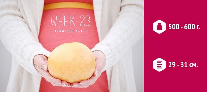 Рост ребенка на 23 неделе беременности