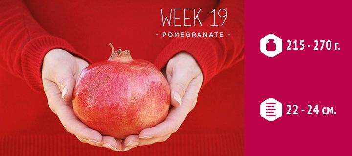 19 неделя беременности - прибавка в весе, шевеления, правильное ... 1acbd6041a9