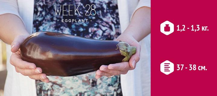 Беременность 28 недель. развитие плода