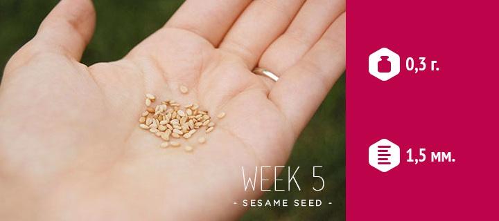 размер эмбриона на 5 неделе беременности